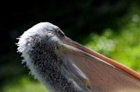 Der Zoo Schönbrunn -eigenartige Vögel und ihre Besucher ...